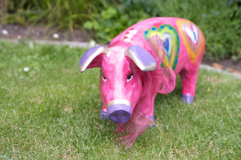 Schwein (Gesicht) - LightMeter